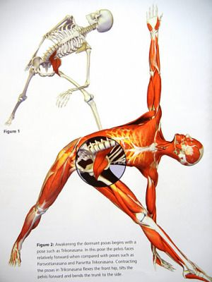 psoas muscle and spring time activities, Human Body